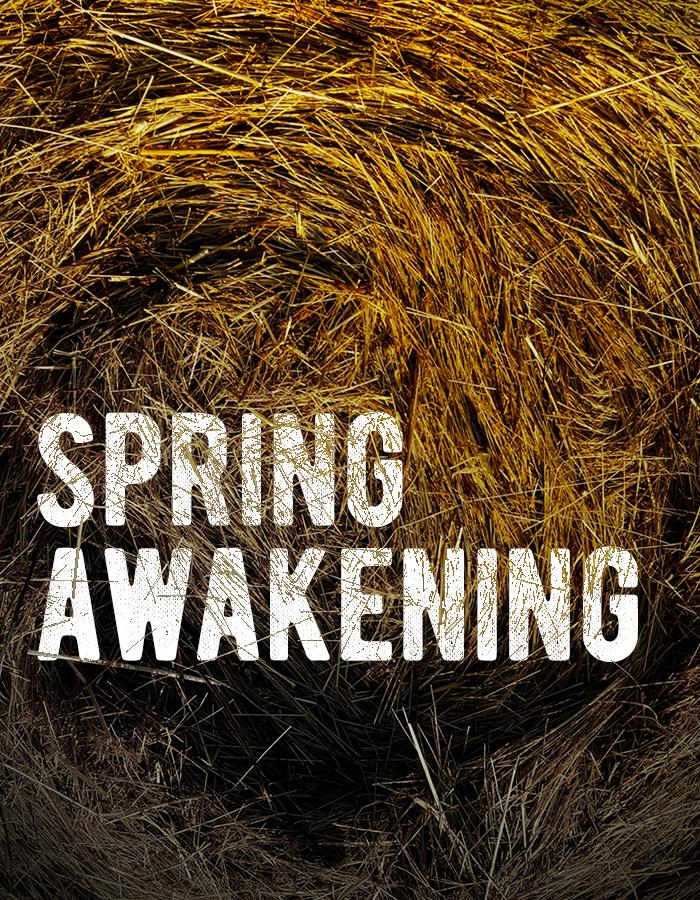 The title 'SPRING AWAKENING' sits in a pile of golden hay. There is a faint indent in the hay suggesting it has recently been disturbed, and the title is partially obscured by the scattering of straw. Sunlight shines brightly on the way towards the top of the image, which gets much darker and more shadowy towards the bottom.